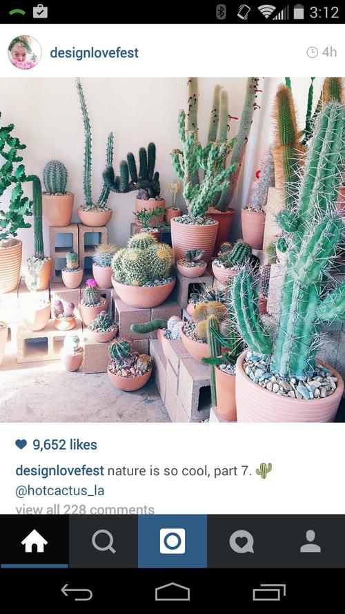 Cactus porch garden